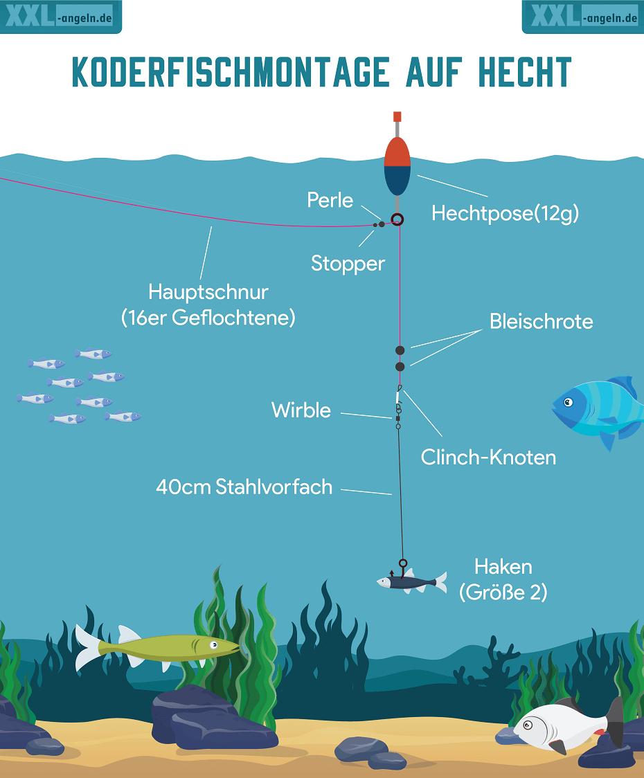 Köderfischmontage für den Hecht von XXL Angeln